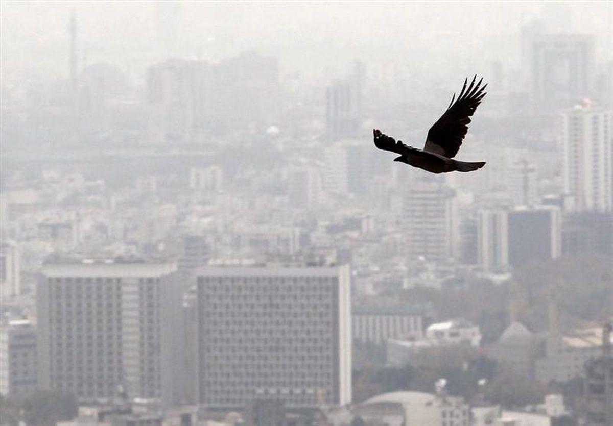 افزایش نرخ اجارهبها در تهران