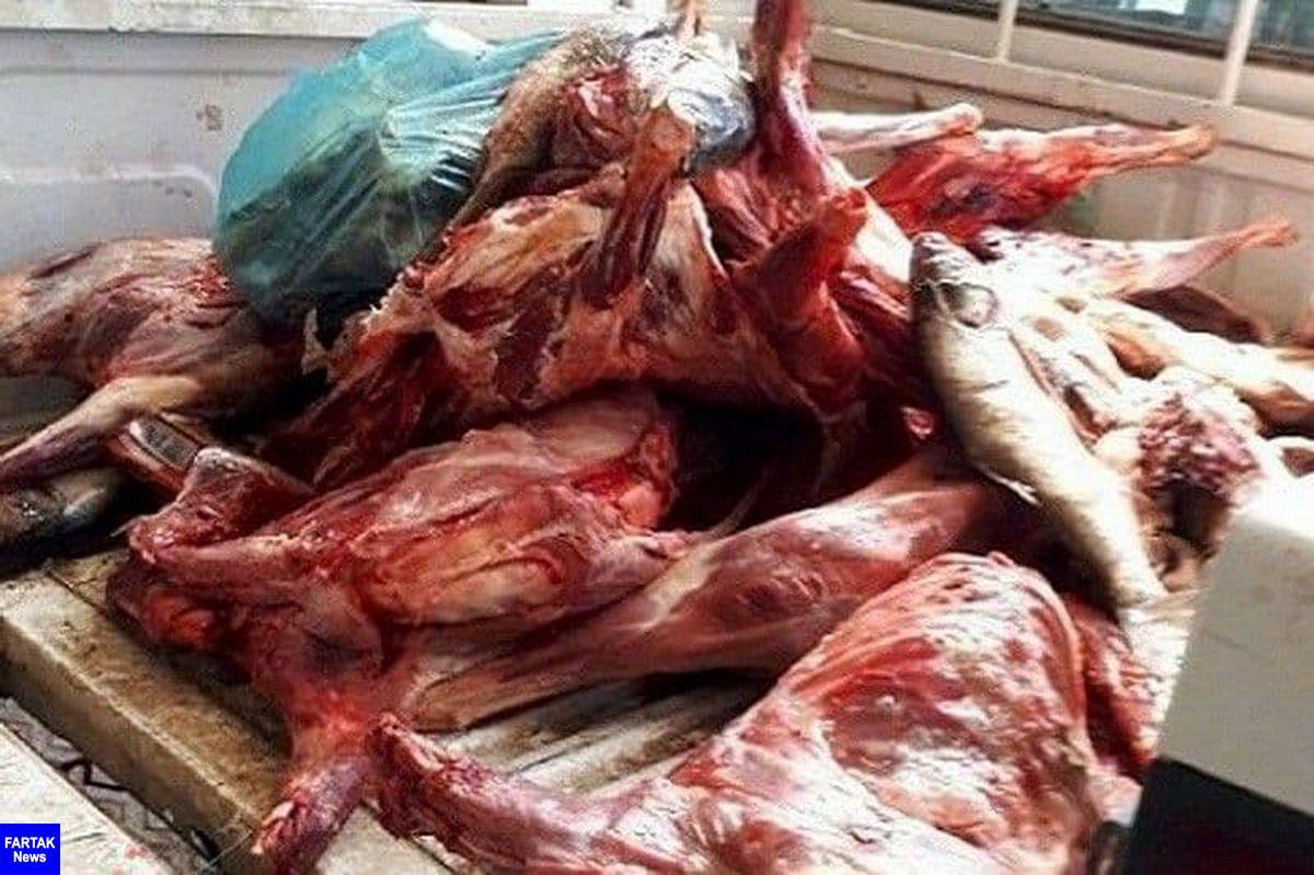 امحاء بیش از 1100 کیلوگرم گوشت غیر مجاز در سطح شهرستان کرمانشاه