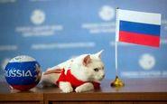پیشگویى گربه روسی اشتباه از آب در آمد