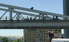لحظه اقدام به خودکشی دختر جوان از روی پل هوایی+ فیلم