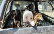 دستگیری شکارچیان پیش از اقدام به شکار در سنقر