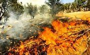 ۱۱۶ هکتار از اراضی کشاورزی اراک و شازند در کام آتش فرو رفت