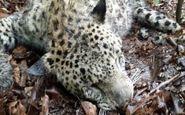 دستگیری شکارچی پلنگ در شرق گیلان