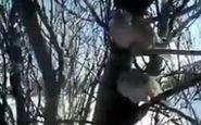 ویدئویی تلخ از یخ زدن پرندگان روی شاخه درخت در سرمای خلخال