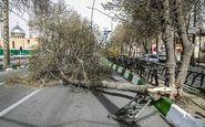 خسارت ۷ میلیارد ریالی وزش شدید باد در اصفهان؛ آغاز سرمازدگی دیررس بهاره در باغات