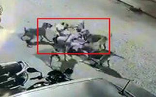 حمله ۶ سگ به مرد مسن در خیابانهای هند