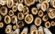 کشف 3 تن چوبآلات جنگلی قاچاق در ساری