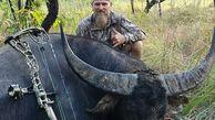انتقام سخت بوفالو از شکارچی در واپسین لحظات!