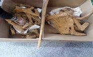 کشف اجساد تاریخی در معدن قدیمی اردستان