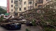 لحظه وحشتناک سقوط درخت روی یک راننده+فیلم