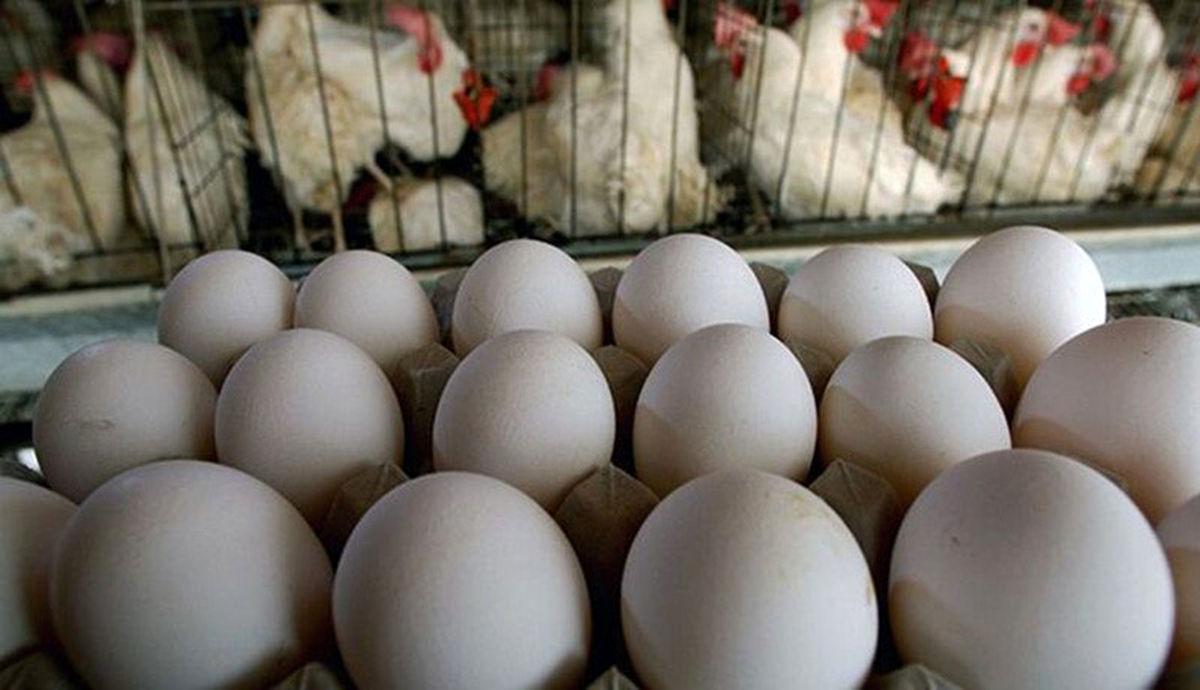 تخم مرغ از ۴ شنبه «طلا» می شود/ گرانی عجیب تخم مرغ از فردا