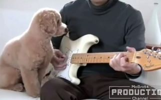 واکنش دیدنی حیوانات به موسیقی+فیلم