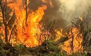 آتش سوزی مزارع در ایلام یک قربانی گرفت