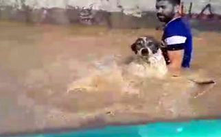 نجات حیوانات گرفتار در «آققلعه» + فیلم