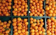افزایش قیمت ۳ برابری قیمت پرتقال