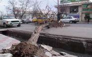 سقوط درختان براثر وزش بادشدید همراه با خسارت در کرج