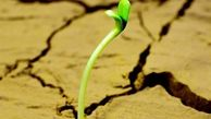 تبدیل بیابانهای خشک به زمینهای حاصلخیز +فیلم