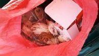 توزیع کننده مرغ های فاسد در کرمانشاه دستگیر شد