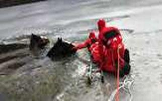 اسب های چموشی که تا مرز یخ زدگی رفتند +فیلم