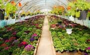 وسعت گلخانه های کشور به ۱۵ هزار هکتار رسیده است