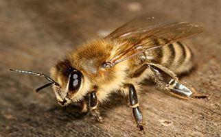 توقف مسابقه فوتبال به دلیل هجوم زنبورها به پرچم کرنر!